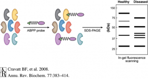 Activity-Based Protein Profiling: Discovering Novel Therapeutic Strategies for Disease